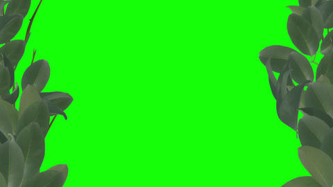 Autumn theme animated background on green background Stock Video Footage