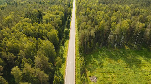 Highway among the forest Footage