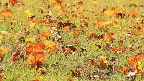 芝生の上の落ち葉 ライブ動画