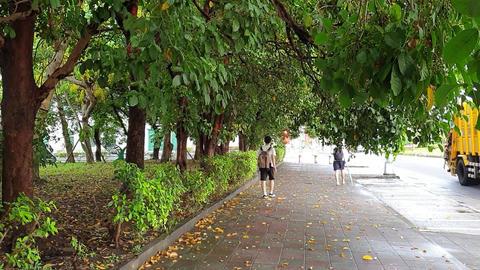 trees,park,travel Live影片