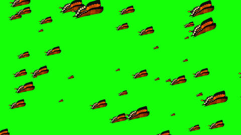 Butterflies flying around on green background. 4k Animation