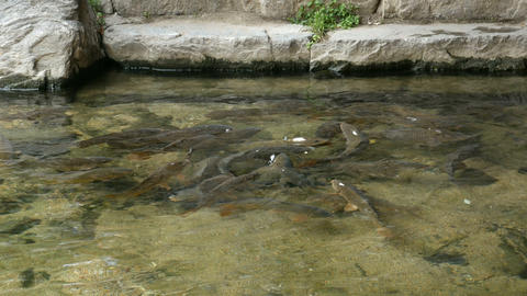 Fish feeding Live Action