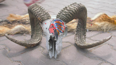 The skull of a ram lying on the ground 001 Live Action