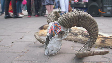 The skull of a ram lying on the ground 002 Live Action