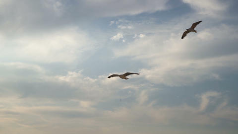 Scenic landscape of few seagulls flying in slow motion Live Action