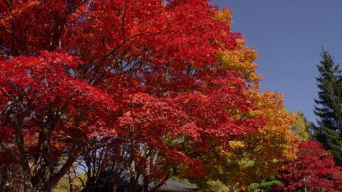 Valley nagano yokoyakeikoku V1-0087 Footage