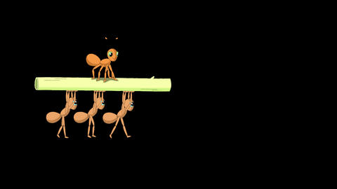 Ants carrying a stem of grass Animation