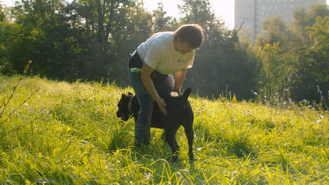 Woman caress black boxer dog Live Action