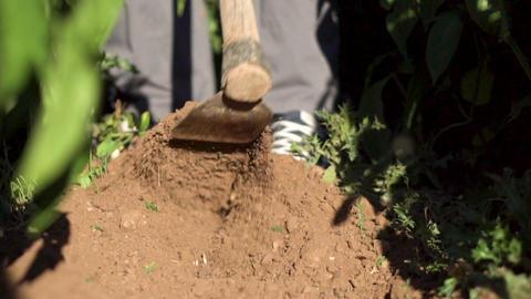 Man Hoeing Vegetable Garden Soil. Slow motion footage Acción en vivo