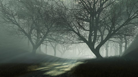 Trail into dark mysterious forest at foggy dusk Live Action