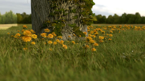 tree trunk with ivy in front of yellow dandelion meadow Animation