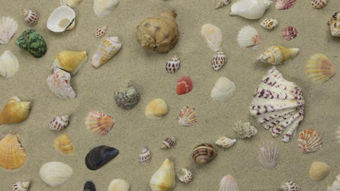 Summer background - seashells on beach sand. Crane shot Footage