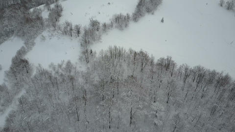 Beauty of wildlife on snowy day. Aerial view of winter mountains covered with Live Action