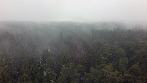 An aerial view of an endless coniferous forest in a snowfall Footage