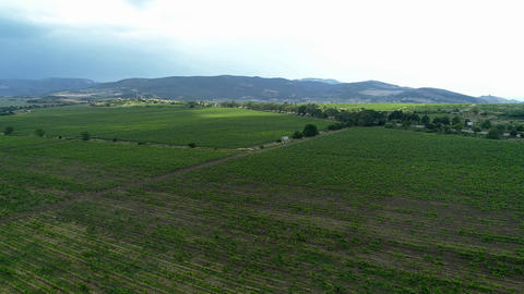 Italian Countryside Beautiful Farms and Vineyards Beautiful Aerial View Live Action