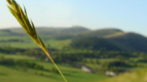 Rural Village With Grass Footage