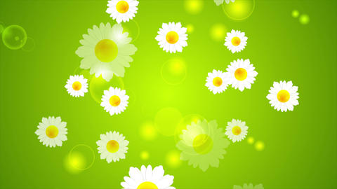 Green summer video animation with camomiles Animation