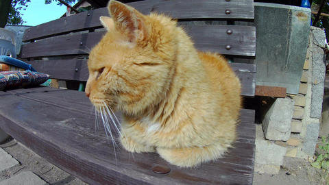 Old ginger cat sleeping on a wooden bench in detail Live Action