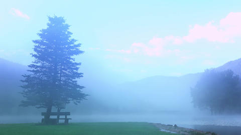 Morning Mist on Forest Lake. UHD Footage