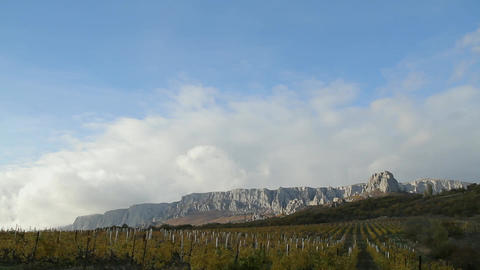 Vineyard on a background of mountains and sky Footage