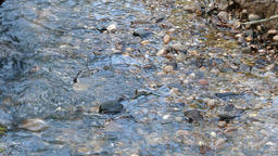 Stream with clear water Footage