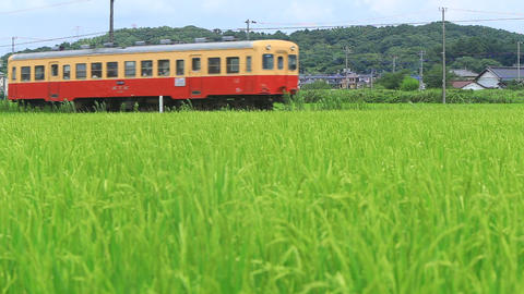 Railway which runs through the sway rice/田んぼとローカル鉄道 Live Action