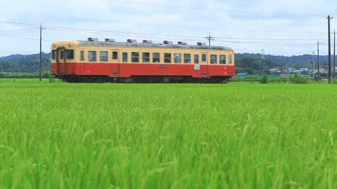 Local railway which runs through the rice fields/田んぼの中を走るロー Live Action