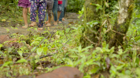 Barefoot Legs Walking On A Muddy Path Somewhere In A Tropical Rainforest Live Action
