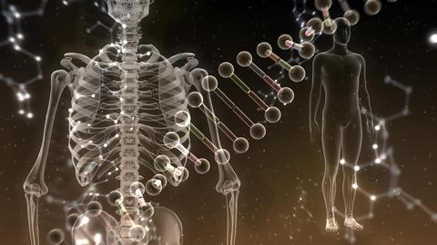 Medical Human Body Skeleton DNA Science Technology images 19 Ah2 4k Animation