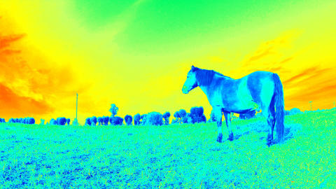 Following of horse with industrial thermal camera scaner. Detecting of body heat loss Live Action