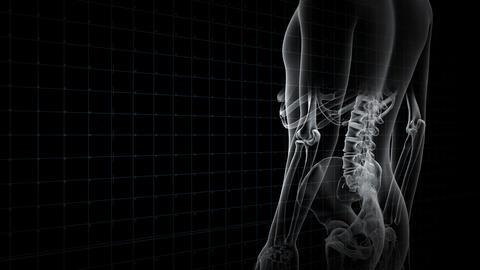 Medical Human Body Skeleton DNA Science Technology images 19 Bc1 4k CG動画