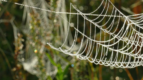A cool breeze sways a web of tangled stalks of dry grass with drops of sparkling Footage