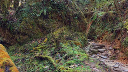 Wild forest mountain nature HD video background. Moss ground stone road Footage