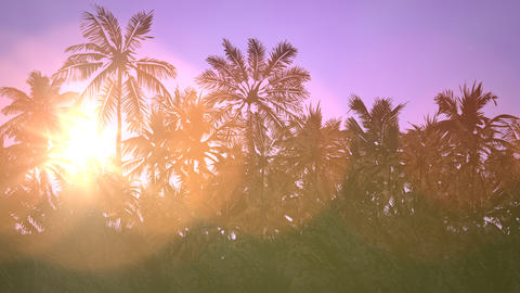 Panoramic view of tropical landscape with palm trees and... Stock Video Footage