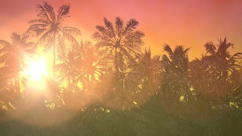 Panoramic view of tropical landscape with palm trees and sunset, summer Animation