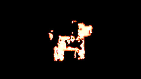 Symbol dog burns out of transparency, then burns again. Alpha channel Premultiplied - Matted with Animation