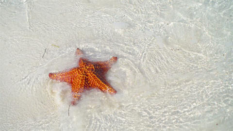 Tropical white sand with red starfish in clear water Stock Video Footage