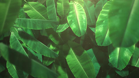 Closeup tropical leaf of trees, summer background Animation
