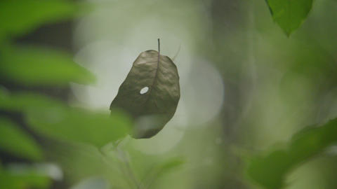 Spider and his web in the forest, Green leaf flying in a spider's web Live Action