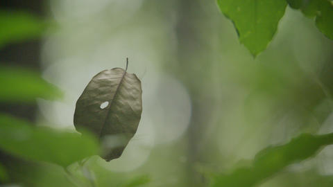 Green leaf flying in a spider's web, Closeup of a spider net in green forest Live Action