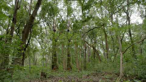 morning fresh green beech forest, Green deciduous forest and trees Live Action