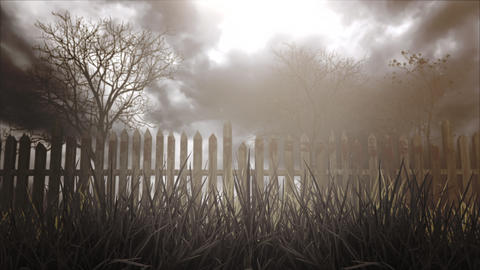 Mystical halloween background with dark forest and fog Videos animados