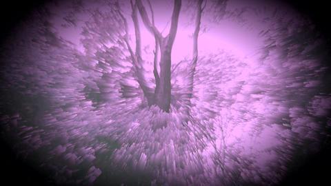 숲을 소재로한 시각예술입니다- 002 Footage