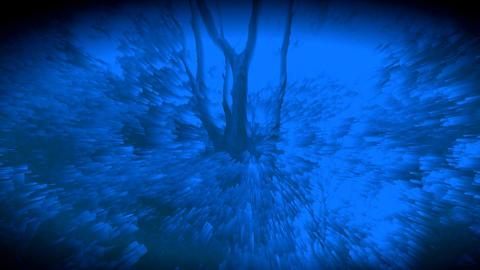 숲을 소재로한 시각예술입니다- 009 Footage