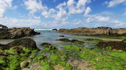A gentle upward motion pan over Cornish shoreline with seaweed and rocks from gr Footage