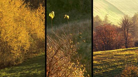 Autumnal scenery. Split screen Footage