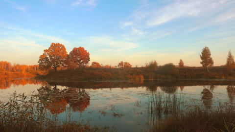 Beautiful autumn, calm forest lake Footage