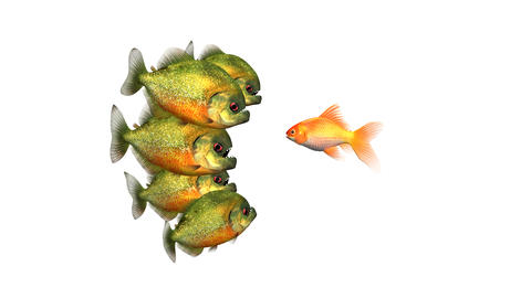 Goldfish Trying to Survive Telling Tales to Piranhas, Funny Conceptual 3d Animation on a White Videos animados