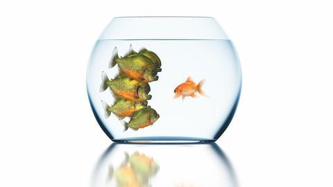Goldfish Tells Something to Stunned Piranhas Videos animados