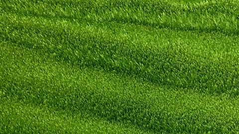 Slowly waving grassy background Stock Video Footage